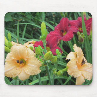 Crimson Shadows Red and Apricot Daylies Mouse Pad