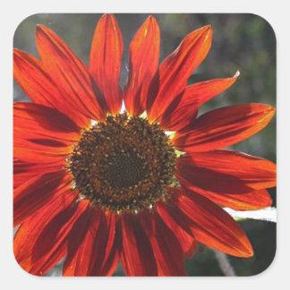 Crimson Sunflower Square Stickers