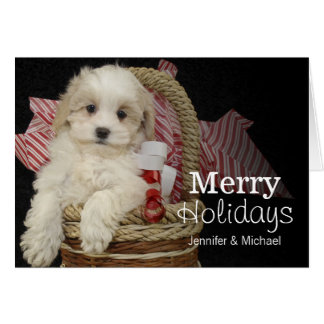 Cristmas Malti-poo puppy sitting in basket Card