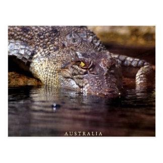 crocodile, A U S T R A L I A Postcard