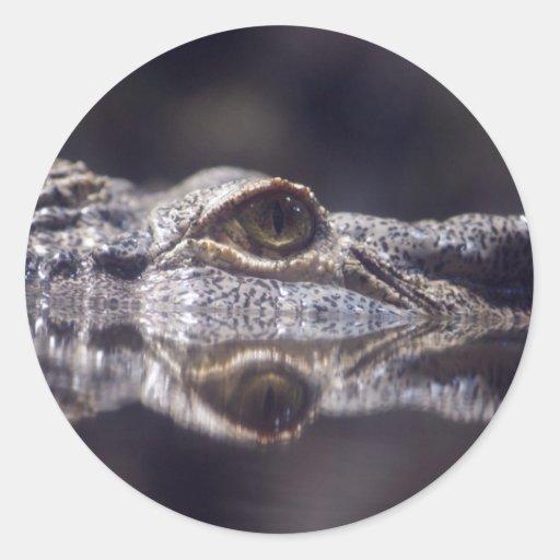 Crocodile Coming Round Sticker