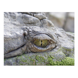 Crocodile eye postcard