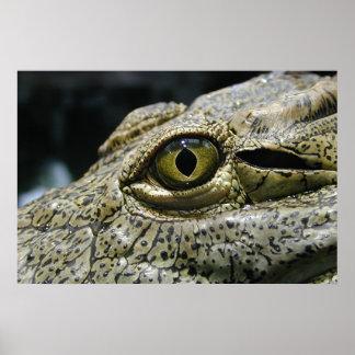 Crocodile eye poster