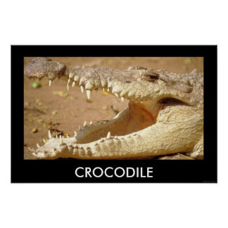 crocodile Jaws from JungleWalk.com Poster