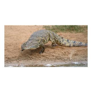 Crocodile Photo Card Template