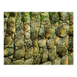 Crocodile Print Postcard