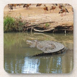 CROCODILE QUEENSLAND AUSTRALIA COASTER