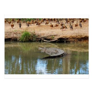 CROCODILE QUEENSLAND AUSTRALIA POSTCARD