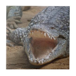 Crocodile Small Square Tile