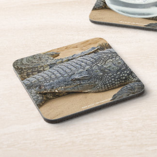 Crocodiles Beverage Coasters