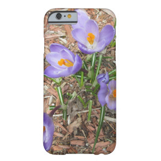 Crocus Flower in Bloom Barely There iPhone 6 Case