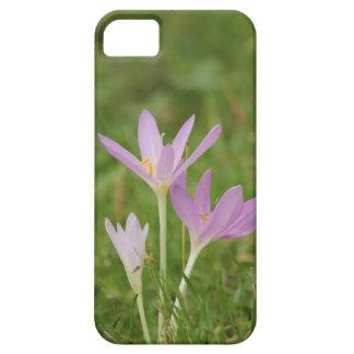 Crocus flower iPhone 5 cover