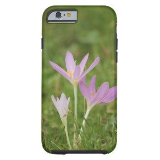 Crocus flower tough iPhone 6 case