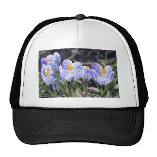 Crocus Flowers Cap