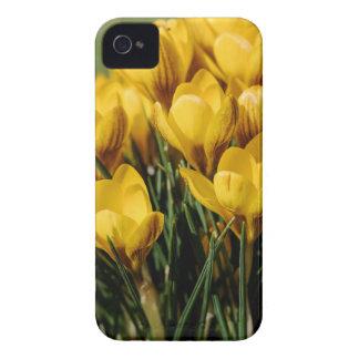 crocus iPhone 4 case
