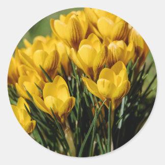 crocus round sticker