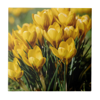 crocus small square tile