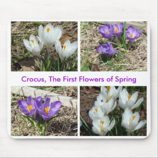 Crocus, The First Flowers of Spring Mouse Pad