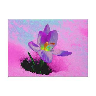 Crocus with snow, photo art, color changes, stretched canvas prints