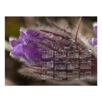 Crocus with Water Beads; 2013 Calendar Photo Print