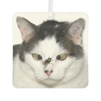 Cross eyed cat and fly car air freshener