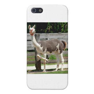 Cross-Legged Llama iPhone Case Case For iPhone 5/5S