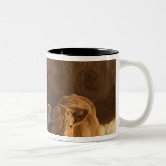 Crossbred cow with calf near Choteau, Montana, Two-Tone Coffee Mug