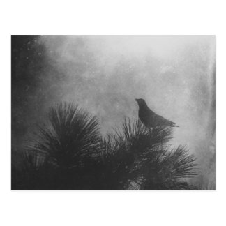 Crow and Pine Postcard