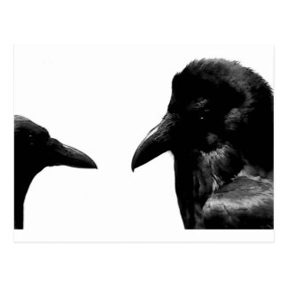 Crow and Raven Postcard