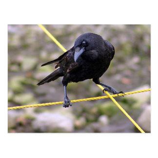 Crow at Crossroads Postcard