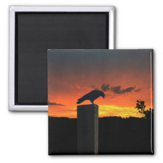 Crow at Sunset Magnet