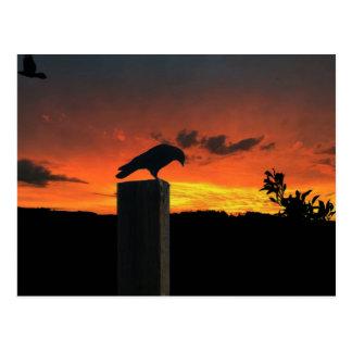 Crow at Sunset Postcard