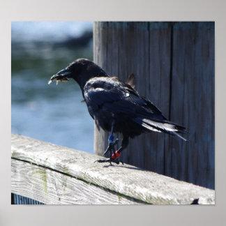 Crow fishing print