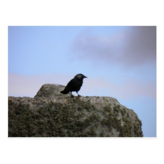 Crow guardian of Stone Henge Postcard