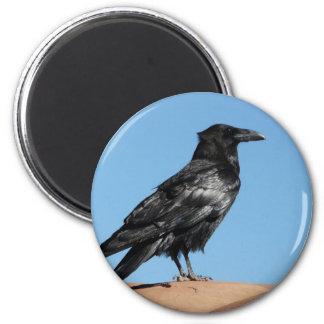 crow magnet