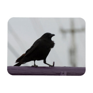 Crow on Purple Magnet
