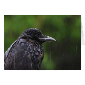 Crow or Raven in the Rain Card