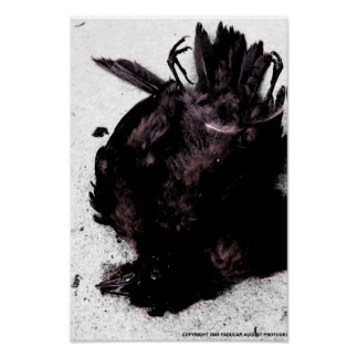 Crow Paducah August Photography Posters