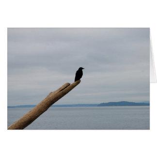 Crow Sentinel Card