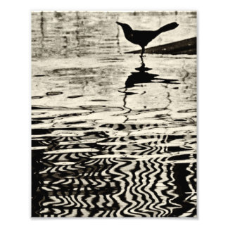 Crow with Reflection on Water - Photograph