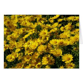 Crown Daisies / Chrysanthemum Coronarium Greeting Card