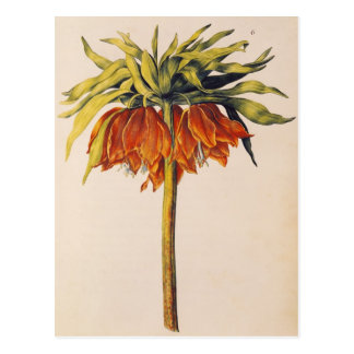 Crown Fritillary, from 'La Guirlande de Julie' Postcard
