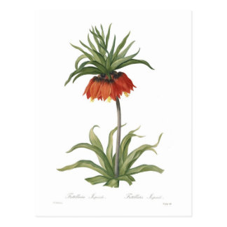 Crown Imperial Postcard