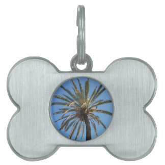 crown of a palm tree pet tag