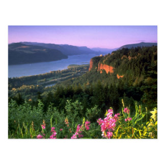 Crown Point, Columbia River Gorge, Oregon Postcard