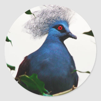 Crowned Pigeon Classic Round Sticker