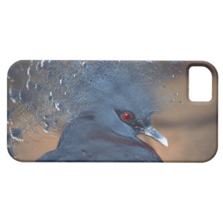 crowned pigeon iPhone 5 cases