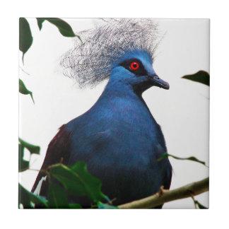 Crowned Pigeon Tile