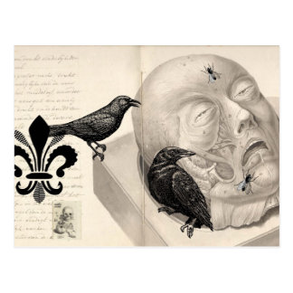 Crows and corpse postcard
