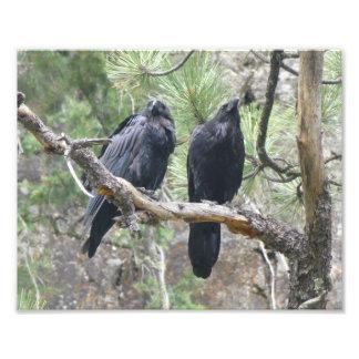 Crows in Colorado Photo